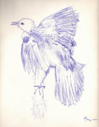 bird_sketch