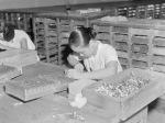 singapore_opium_worker