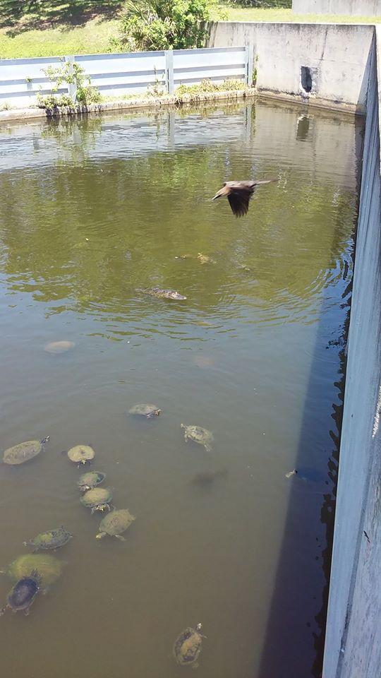 Bird, alligator, turtles.